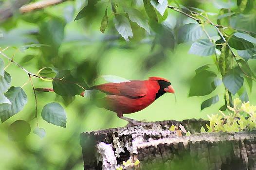 The Red Bird by Danielle Allard