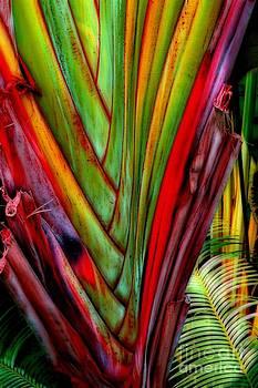 The Red Jungle by Joseph J Stevens