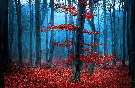 The Red Tree from the Foggy Forest by Toma Bonciu