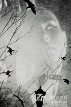 The Reincarnation of Belle by Sharon Kalstek-Coty