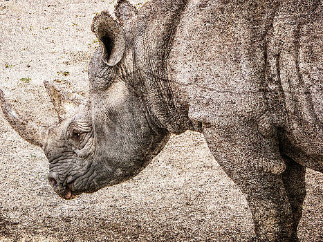 Ray Van Gundy - The Rhino