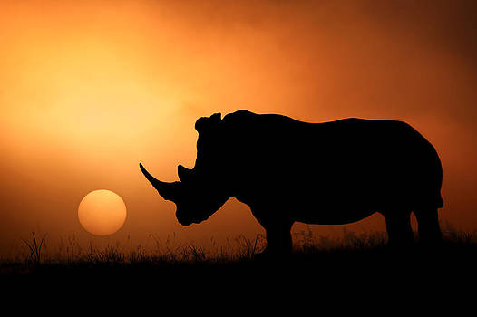 The Rhino Sunrise by Mario Moreno