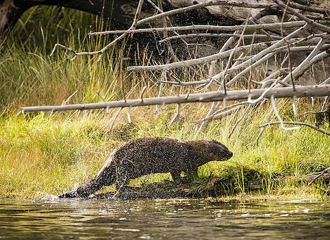 Paul W Sharpe Aka Wizard of Wonders - The River Otter Shake