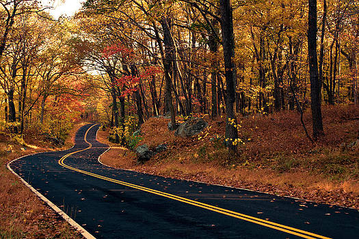 The Road Into Autumn by Zev Steinhardt