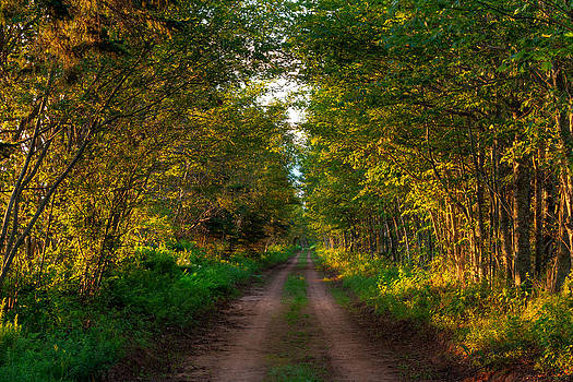 The Road Less Travelled by Matt Dobson
