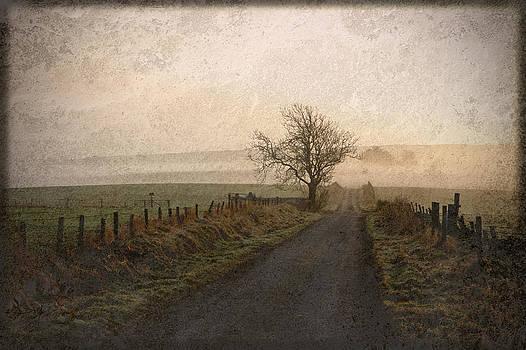 Liz  Alderdice - The Road Not Taken