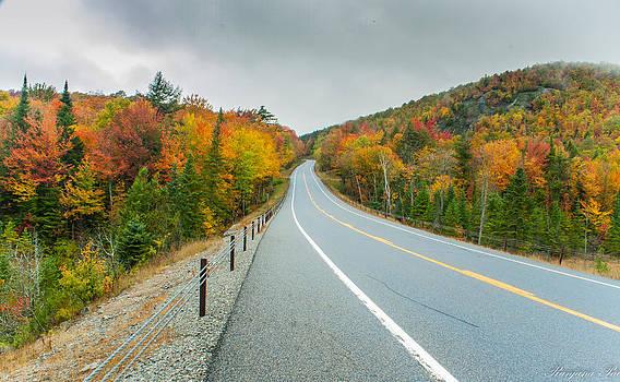 The Road by Ranjana Pai