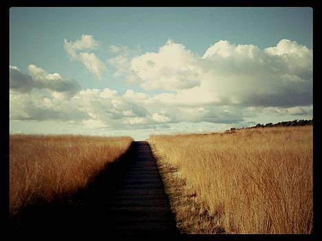 The Road Rarely Taken by Beril Sirmacek
