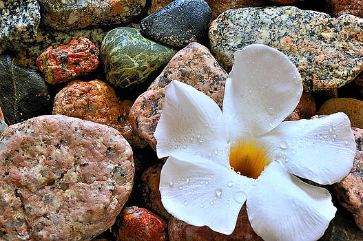The Rock Flower by Marwan Khoury