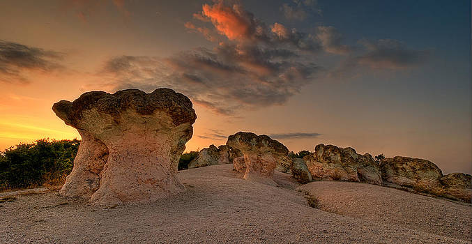The Rocky Mushrooms by Andrey Trifonov