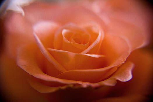 The Rose by Kim Lagerhem