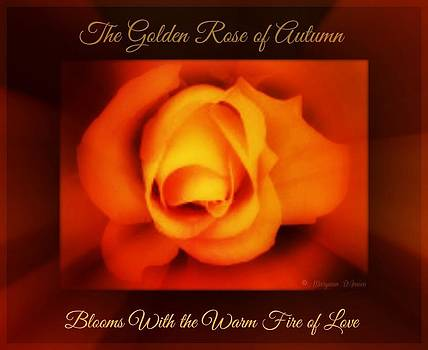 The Rose of Autumn by Maryann  DAmico