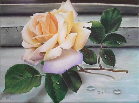The Rose by Paul Bennett