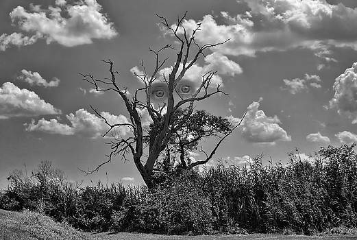 The Demon Tree by Lanis Rossi