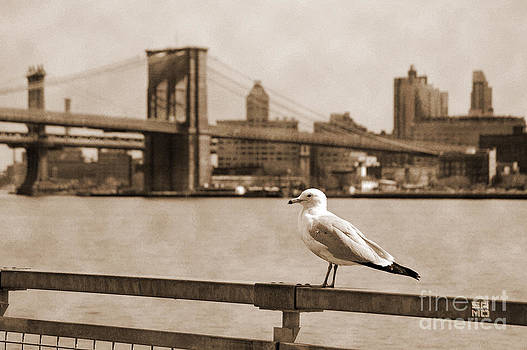 RicardMN Photography - The seagull of the Brooklyn Bridge vintage look
