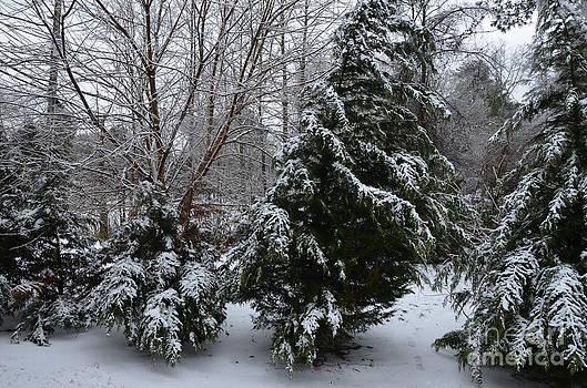 The Seasoning Snow by Adelmo Leite de Sa