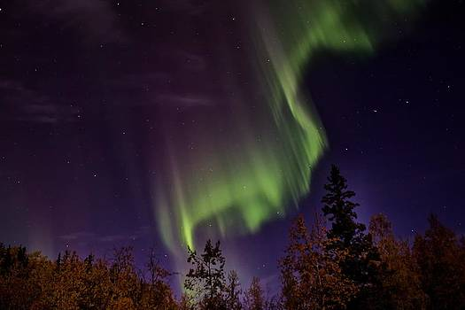 The September Aurora Fairbanks Alaska by Michael Rogers