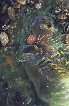 The Shell Collector by Jaimie Whitbread