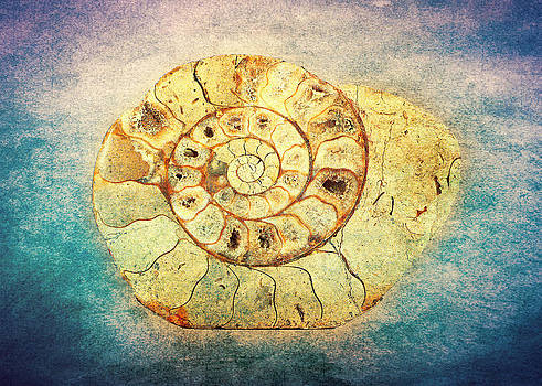 The Shell - Fibonacci - The Golden Spiral - in Nature by Denis Marsili