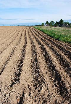 Ramunas Bruzas - The Soil