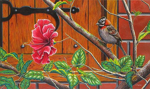 The Sparrow who visit your window by Luis Aguirre