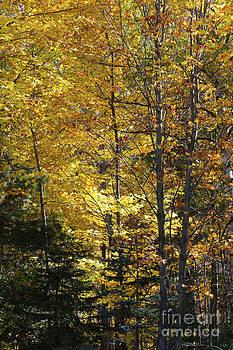 The Splendor Of Yellow   by Kathy DesJardins