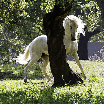 The Stallion and the Tree by Carol Walker