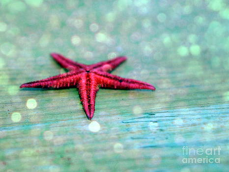 The starfish by Anne Seltmann