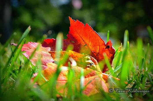 The start of the Fall by Terri K Designs