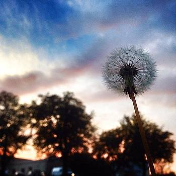 The Still-standing Dandelion | St by Christy LaSalle