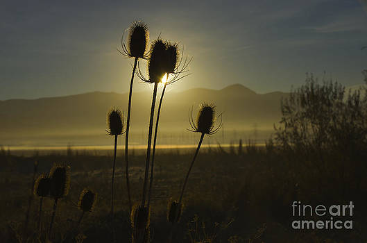 The Sun rises by Nicole Markmann Nelson