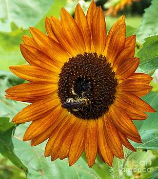 The Sunflower and The Bee by Annette Allman