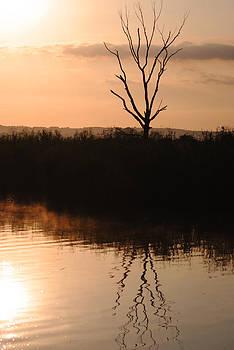 The Sunrise Tree by Leon James