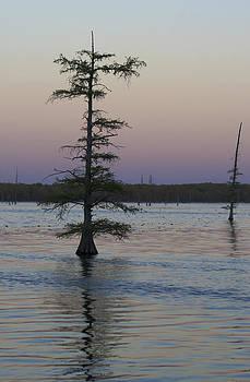 The Swamp in Pastel Light by Jane Eleanor Nicholas