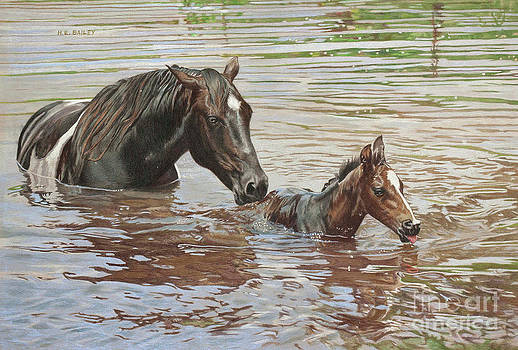 The Swimming Lesson by Helen Bailey