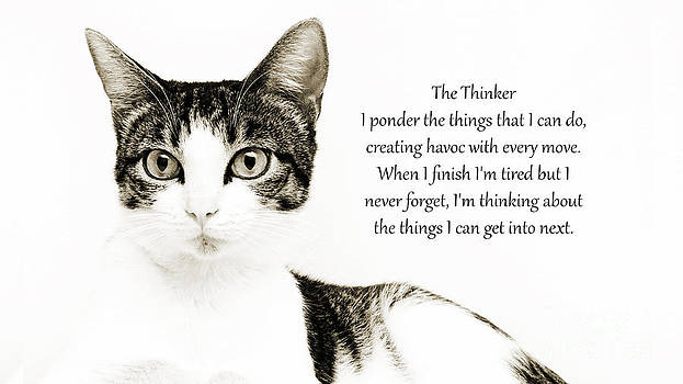 Andee Design - The Thinker