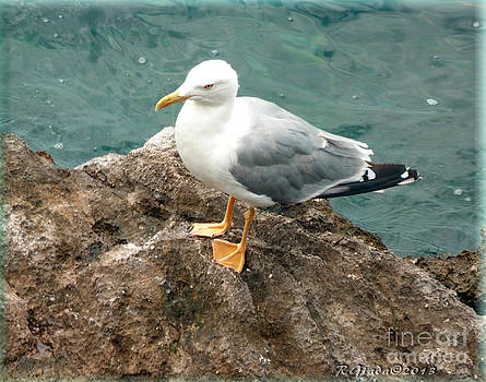 Giada Rossi - The Thinker - seagull photography by Giada Rossi