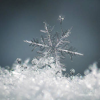 The Torchbearer A Colorado Snowflake by Beth Riser