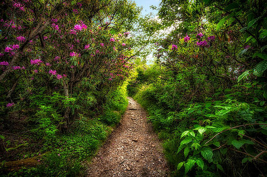 The Trail - Devil's Court House - Blue Ridge Parkway by Dustin Ahrens