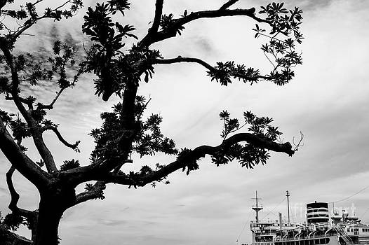Dean Harte - The Tree and the Boat