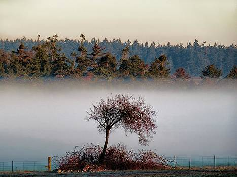The Tree and the Fog by Rick Lawler