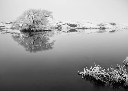 The tree... by Arnar B Gudjonsson