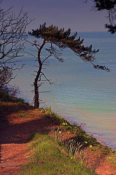 Stephen Barrie - The Tree by the Sea