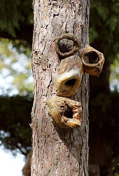 The tree face by Danielle Allard