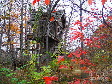 Paddy Shaffer - The Tree House At Inniswood