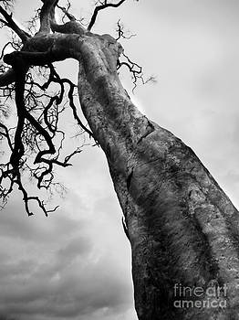 The Tree lll by Wendy Slee