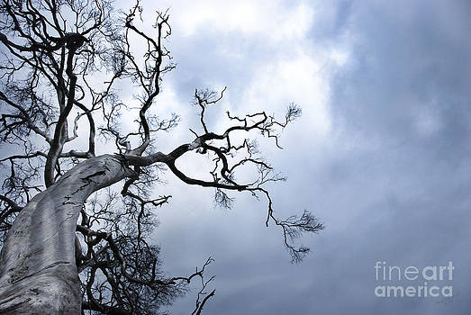 The Tree lX by Wendy Slee
