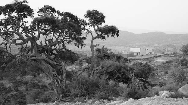 The tree by Mehdi Laraqui