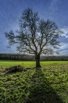 The Tree of Old by Terry Cosgrave