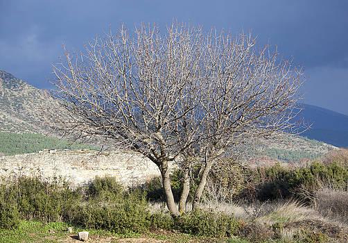 Ramunas Bruzas - The Tree
